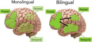 Quotes about Being Bilingual